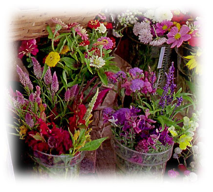 http://www.indianheadfarm.com/images/cut_flowers_1.jpg
