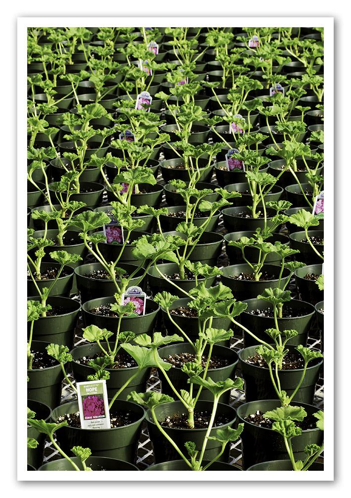 ger-greenhouse-spring
